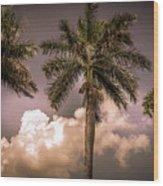 Palm Trees Against Beautiful Sky Wood Print