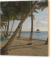 Palm Trees And Hammock On San Pedro Wood Print