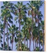 Palm Trees. California, Sunny Beauty Wood Print