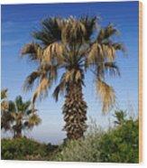 Palm Trees Growing Along The Beach Wood Print