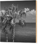 Palm Trees In Black And White At Laguna Beach Wood Print