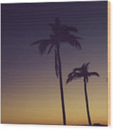 Palm Trees In The Morning Light Wood Print