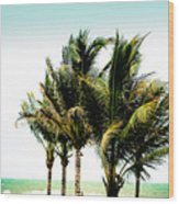 Palm Trees Ocean Breeze Wood Print
