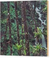 Palm Trunks And Waterfall El Yunque Wood Print