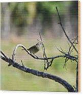 Palm Warbler Greetings Wood Print