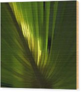Palmetto Embrace Wood Print