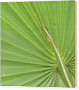 Palmetto II Wood Print