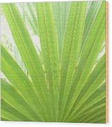 Palmetto Wood Print