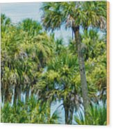 Palmetto Palm Trees In Sub Tropical Climate Of Usa Wood Print