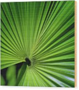 Palmgreen Wood Print