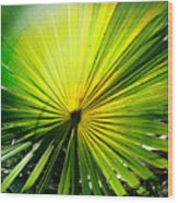 Radial Palm Wood Print