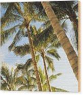 Palms Against Blue Sky Wood Print