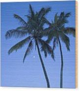 Palms And Blue Sky Wood Print