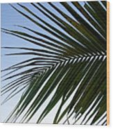 Palms To The Sky Wood Print