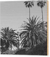 Palms2 Wood Print