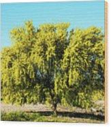 Palo Verde Wood Print