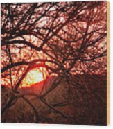 Palo Verde Sunset Wood Print