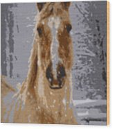 Palomino In The Snow Wood Print
