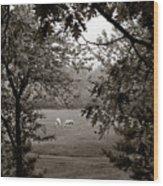 Palominos Framed In Oak Wood Print