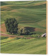 Palouse Farm 1 Wood Print