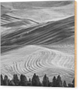 Palouse Field 2740 Wood Print