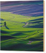 Palouse - Later Afternoon Wood Print