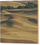 Palouse Patchwork By Jean Noren Wood Print