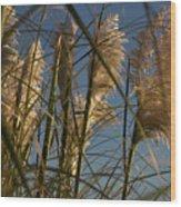 Pampas Grass At Sunset Wood Print