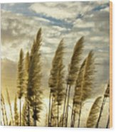 Pampas Grass Wood Print