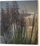 Pampas Grass Sunset Wood Print