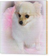 Pampered Pomeranian  Wood Print