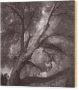 Pams Tree  Two B And W Wood Print