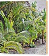Panama Trees Wood Print