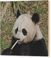 Panda Bear Eating Bamboo Shoots Up Close And Personal Wood Print