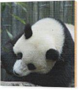 Panda Bear Sleeping On A Fallen Tree Branch Wood Print