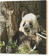 Panda Breakfast Wood Print