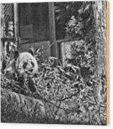 Panda Feast Wood Print
