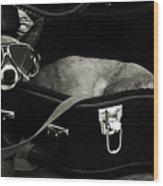 Panhandling Dog Wood Print by Julie Niemela