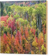 Panoply Of Autumn Color Wood Print
