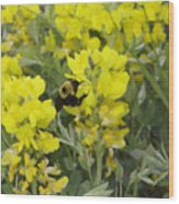 Panorama Hills Bluffs Bee Painting Wood Print