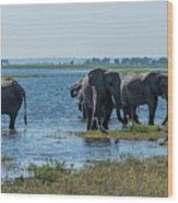 Panorama Of Elephant Herd Drinking From River Wood Print