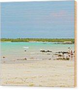 Panorama Of The El Garrapatero Beach On Santa Cruz Island In Gal Wood Print