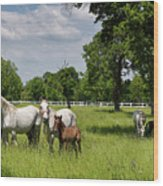 Panorama Of White Lipizzaner Mare Horses With Dark Foals Grazing Wood Print