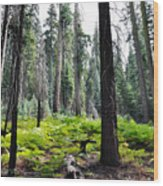 Panoramic Forest Wood Print