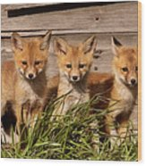 Panoramic Fox Kits Wood Print