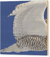 Panoramic Prairie Snowy Owl  Wood Print