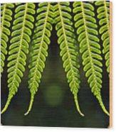 Panoramic Veil Of Ferns Wood Print