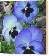 Pansies 0823 Wood Print