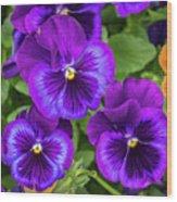 Pansies In Purple And Blue Wood Print