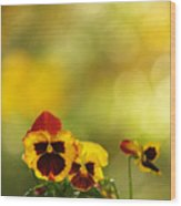 Pansies In The Autumn Glow Wood Print